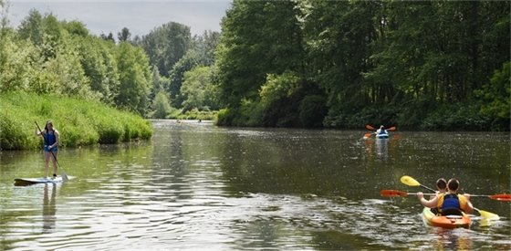 Paddlers on Sammamish River