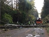 Trees and power lines down
