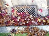 Drain clogged with leaves
