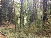 North Creek Forest