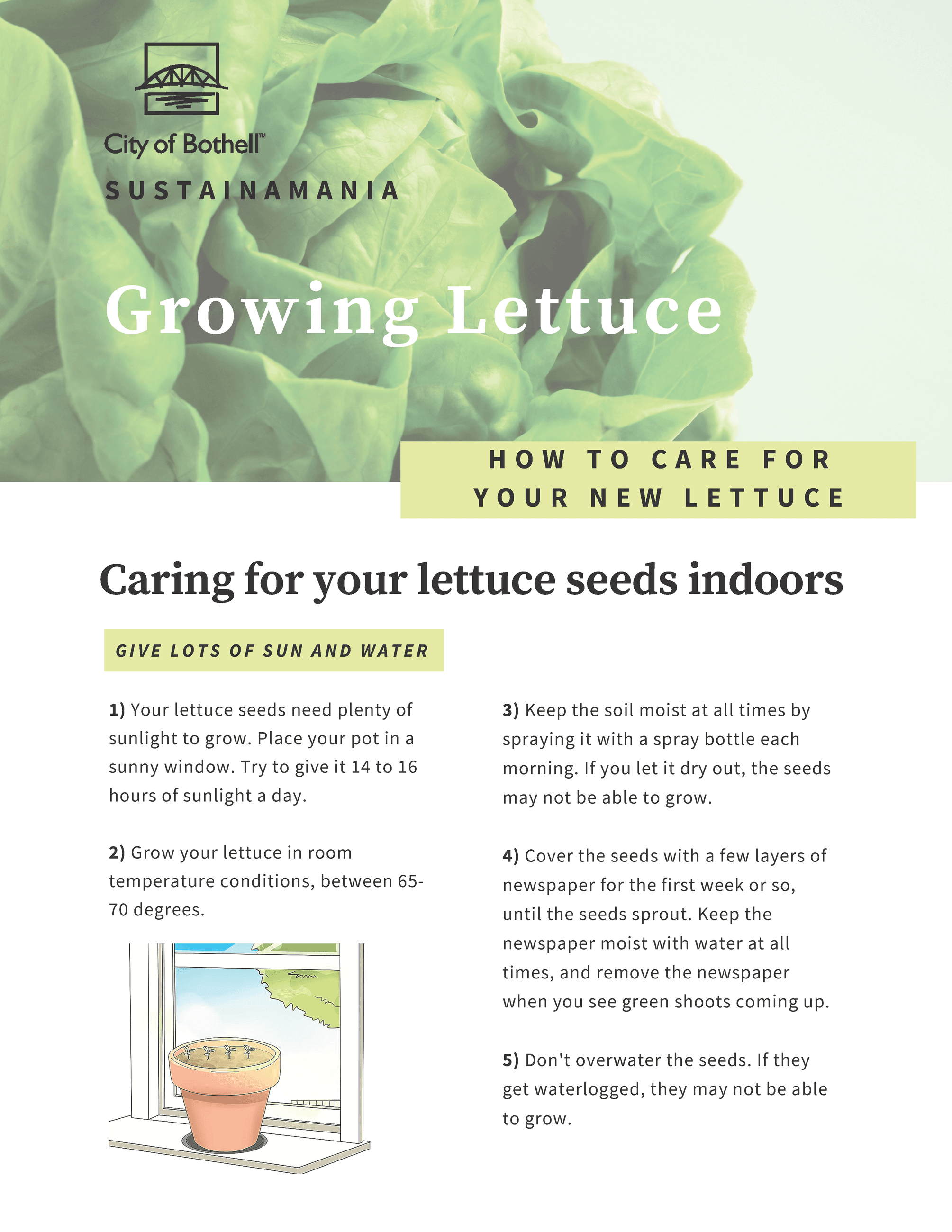 Growing Lettuce Sustainamania